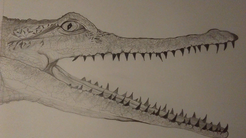 Crocodile – Annie Appleby